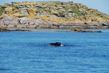 Seal as nav aid