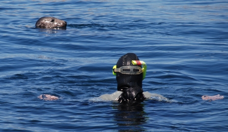 Rachel swimming with seal